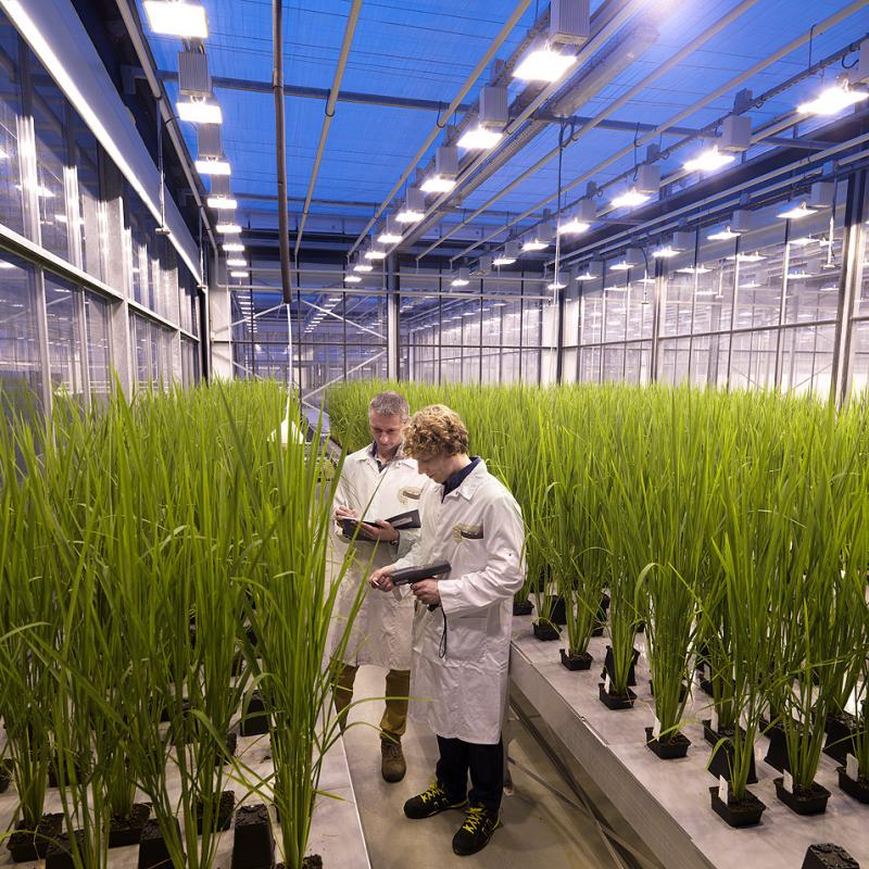 Research at Bayer Crop Science, Ghent